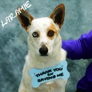 laramie thank you 1