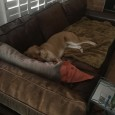 We adopted Matilda last July (we renamed her Phoebe). She is such a great addition to our home. She is now living a very comfortable […]