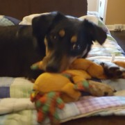 Meara love chewing on toys!