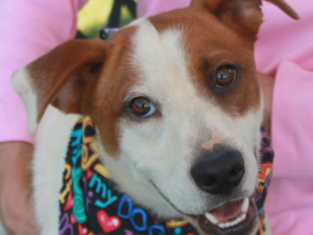 We just love this boy! Newton is a 3 year-old all-American mutt who is an all-around great dog. We have no idea on his breed […]