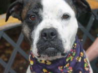 Looking for a fun dog who's got a sense of adventure and a great disposition? That's our Princess! In spite of having been abandoned and […]