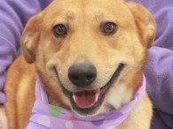 Meet Holly, a friendly and outgoing 3 year-old Lab/Shepherd mix female with gorgeous big brown eyes. She came into a rural county dog shelter as […]