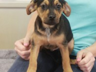 Reagan is a sweet little Heinz-57 puppy who was born on Nov 18. His mom Lacey came to us a week before as a very […]