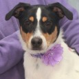 Bristol is a very photogenic 9 month-old pup who's main goal in life is to play, play, play! She looks like a cross between a Border Collie and a Rat Terrier and is a great size at only about 30 […]