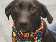 Gilda is a lovable 2 year-old Lab mix female with an outstanding disposition. Hard to believe that she was found as a stray and not […]