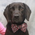 Jordan is a sweet and gentle 3 year-old Lab mix who seems like an old soul. He came into an overcrowded rural county dog shelter […]