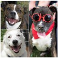It's time for our annual Adoption Reunion Picnic! If you adopted a dog from Canine Lifeline, or are a supporter or volunteer of ours then we would like to see you and your fur kids at our annual adoption reunion […]