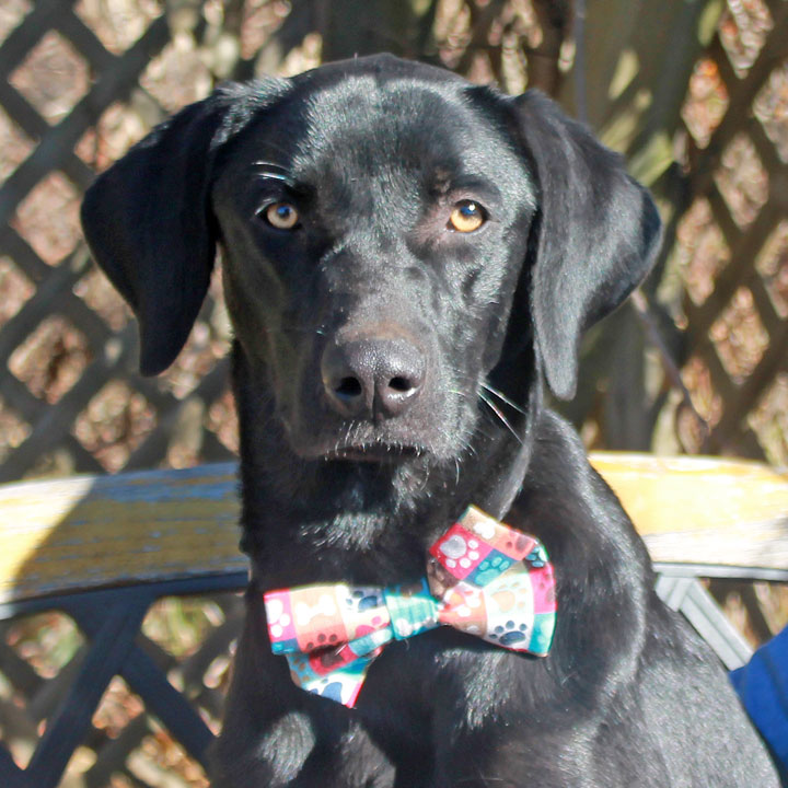 Joey-ADOPTED! | Canine Lifeline