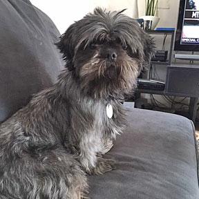 Gloria Adopted Canine Lifeline