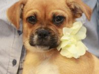 Cookie and her 5 brothers and sisters found themselves homeless at a high-kill rural county dog shelter and were transferred from there to a neighboring county shelter where dogs have a chance at finding rescue. As many of us at […]