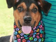 Oliver is a sweet 8 month-old All-American mutt who came into an overcrowded county dog shelter as a stray and from there, came to Canine Lifeline so he would have more time to find the perfect new home. His breed […]