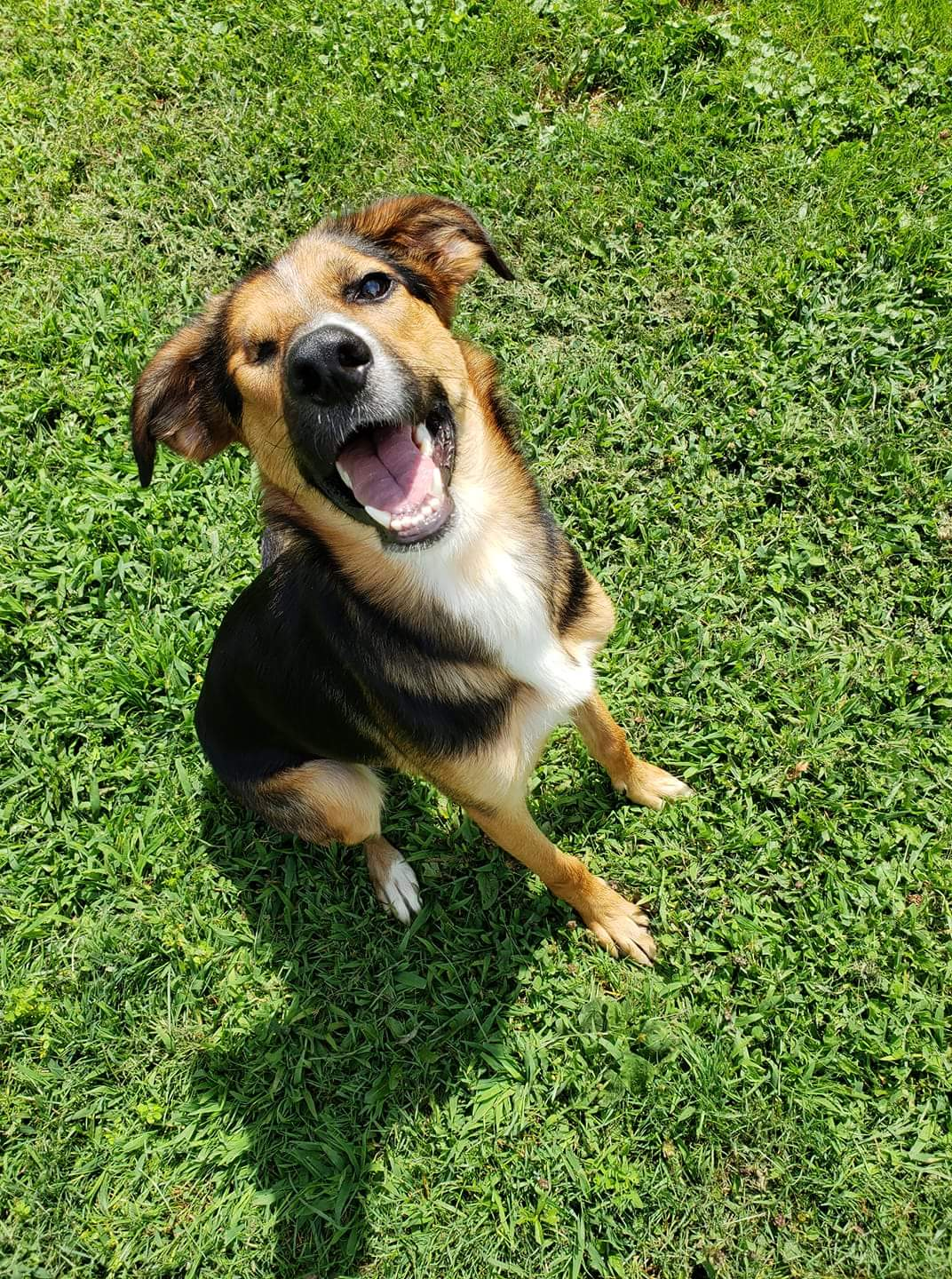"We adopted Lyla (previously ""Winky"") only a few short weeks ago and couldn't be happier. She loves her brother Riggins and her new backyard. They are inseparable. She doesnt let the fact she has one eye slow her down. Lyla […]"