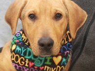 We love, love, LOVE this dog! Mervin is a super-cute 6 month-old Shepherd/Basset mix male with loads of personality and charm. We don't know how in the world he ended up homeless at an overcrowded rural county dog shelter but […]