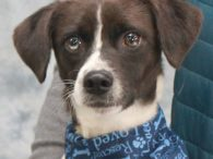 Curt is a handsome 1 year-old pup whose breed mix is really anyone's guess. This guy found himself homeless at a rural county dog shelter and made the trip to Canine Lifeline so he would have more time to find […]