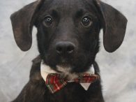 This sweet 9 month-old Plott Hound/Lab mix pup is Crowley. There might be a little Beagle in the mix too as he ony weighs about 23 pounds so is on the smaller side. We saw his adorable face on a […]