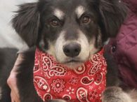 This handsome pup is Chevy, a gorgeous 9 month-old Retriever mix with pretty markings and a sweet disposition. He was turned into an overcrowded rural county dog shelter along with his sisters Portia and Frieda. While we don't know why […]
