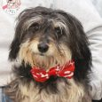 Shaggy dog lovers, meet Howie! This cute and cuddly 1 year-old boy was found as a stray and taken to the local shelter. No one claimed him so he made the trip to Canine Lifeline so he could take his […]