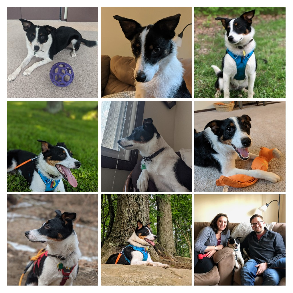 Fenway was adopted 1 year ago today! 4/20/2019. He was advertised as a nice and energetic you pup and he has lived up to that statement. Since joining our family Fenway had enjoyed hiking, camping, and even kayaking (he was […]