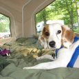 Clover has been with our family for about a year and 1/2 now and is making great progress!! Clover enjoys camping and playing for hours in the backyard. In the past several months she's visited family in Michigan and attended […]