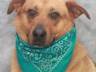 Meet Chase, a sweet and loving 4 year-old Shepherd mix male who came to us along with his buddy Sugar after the pair lost their home. We don't know why their owner could no longer care for them but they […]