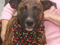Lincoln is a good-looking 1 year-old Mountain Cur mix male who was found as a stray along with his sister Lilly and taken to the local shelter. When the pair wasn't claimed there, they made the trip to Canine Lifeline […]