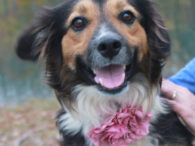 Meet Nessie, a beautiful 2 year-old Collie mix who looks like she's had a rough life to date. This girl was found as a stray and when no one owner came forward to claim her at the local shelter, she […]