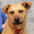 Kiefer is a friendly and fun-loving 1 year-old Shepherd mix boy who's looking for a new family to love. He was adopted from a county dog shelter but his new family's landlord said he had to go so back to […]