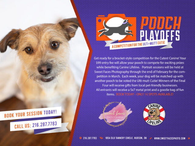 Think you've got the cutest canine in Northeast OH? If your dog is a ham in front of the camera, enter your adorable furry buddy in Pooch Playoffs sponsored by Sweet Faces Photography with 100% of the proceeds to benefit […]