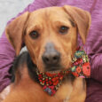 This wonderful 2 year-old Hound/Shepherd mix boy is Emmett. He found himself homeless at a rural county dog shelter and is now with us looking for the perfect forever home. Emmett is an affectionate dog who is very well-mannered. He […]