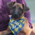 Jed is a friendly and outgoing 5 month-old pup who found himself homeless at an overcrowded county dog shelter along with his twin sister Josie. We don't know what circumstances led them to be at the shelter but they both […]